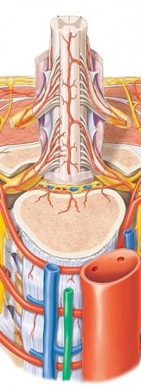 anatomyThumb